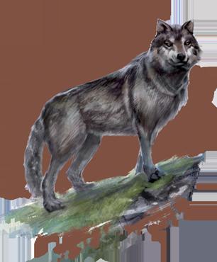 external image wolf.png?v3